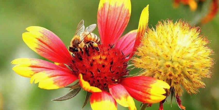 【蜜蜂知识】蜜蜂的生物学特性有哪些?