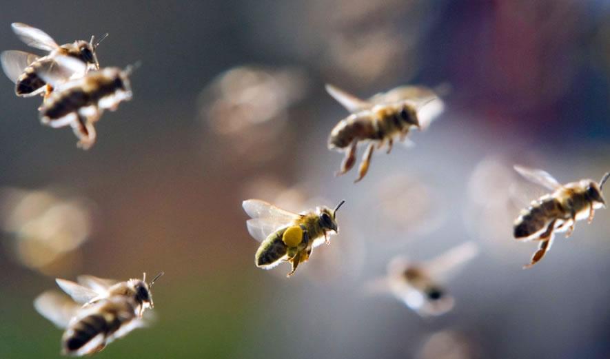 【蜜蜂知识】关于蜜蜂的知识有哪些?