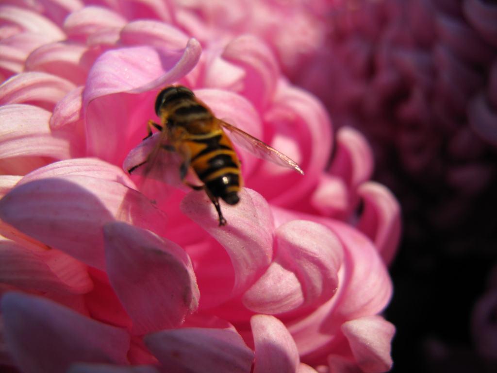 【蜜蜂知识】关于养蜜蜂的基础知识