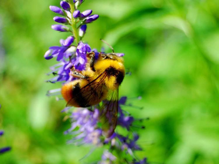 【蜜蜂知识】蜜蜂养殖的基础知识