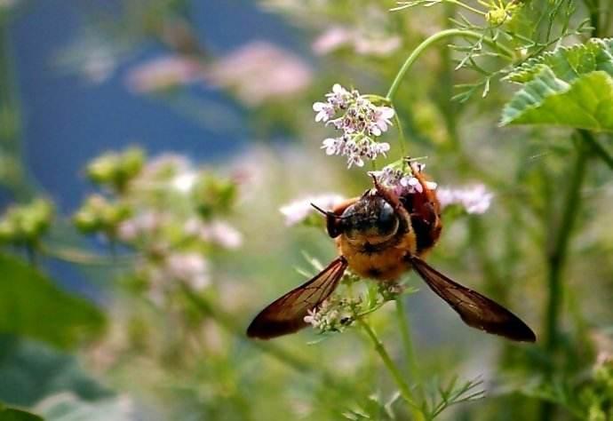【蜜蜂知识】用什么方法可以赶走蜜蜂