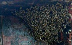 蜂蜡和蜂巢的区别
