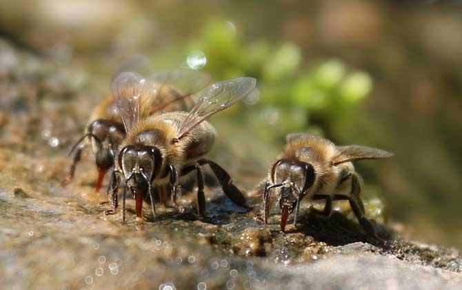 蜜蜂窝与马蜂窝的区别
