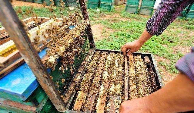 蜜蜂多少钱一箱