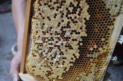 蜜蜂巢虫如何防治