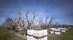 蜂群冬季如何管理