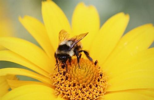 蜜蜂养殖成本高吗?