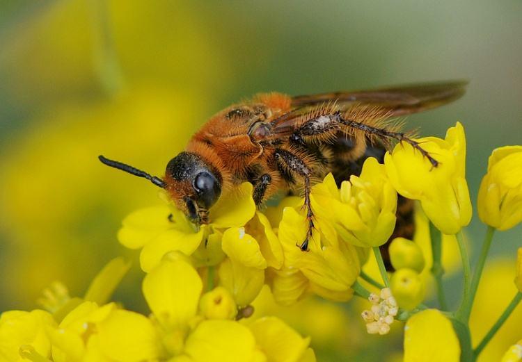 蜂群没有蜂王如何养好蜜蜂