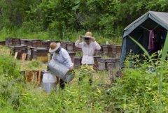 【蜜蜂养殖】养蜂人为什么都长寿