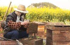 【蜜蜂养殖】养蜂人一年能赚多少钱?