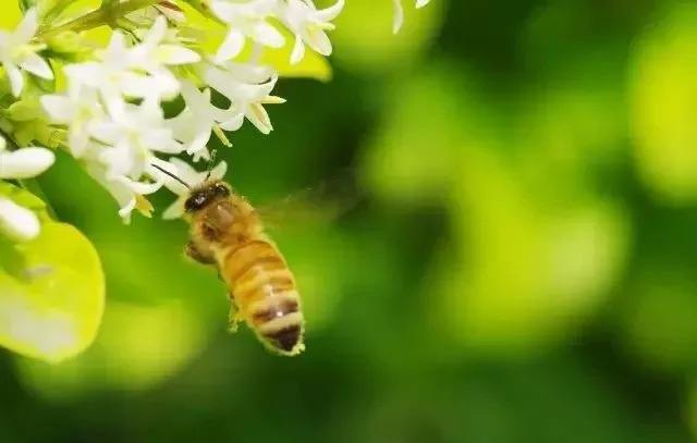 养蜂人一年能赚多少钱?