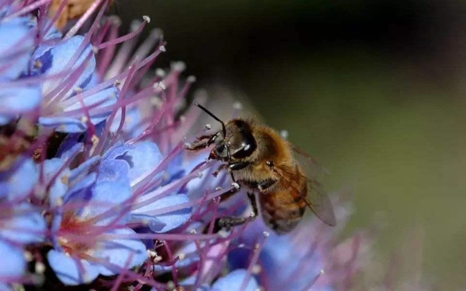 蜜蜂养殖需要掌握哪些知识?