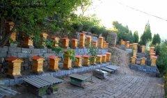 在农村养殖蜜蜂赚钱吗?