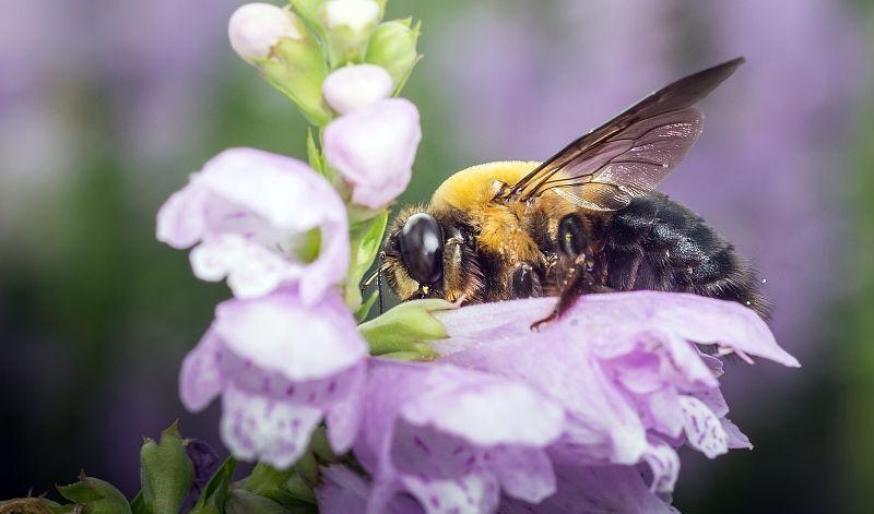 怎样养殖蜜蜂它才不跑?