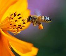 中蜂双王群的养殖技术视频