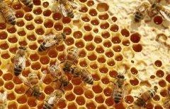 蜜蜂春季双王繁殖法