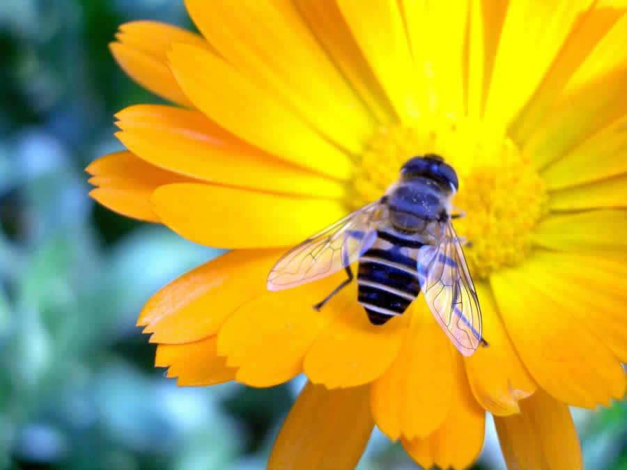 蜜蜂都吃什么食物?