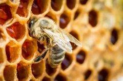 蜜蜂冬季正确的喂糖方法