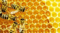 养蜂怎样防止老鼠有效?