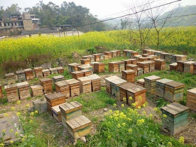 蜜蜂孢子虫病如何防治?