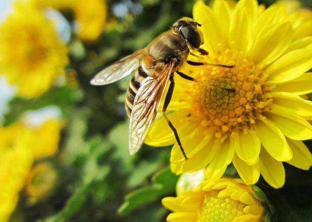 蜜蜂蛹病如何防治?