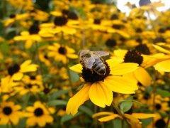 蜜蜂喂什么能加快繁殖?
