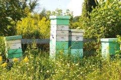 新手养蜂注意事项有哪些?