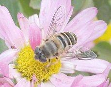 蜜蜂喂什么繁殖得快?