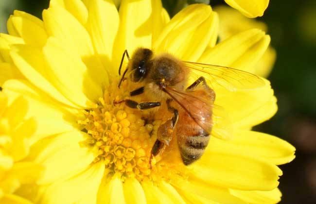 养蜂初学者如何养好蜜蜂