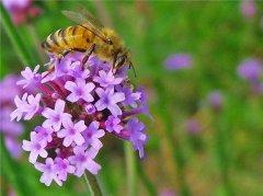【蜜蜂养殖】驱赶蜜蜂的最佳方法