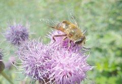 养蜂怎样让蜂群多产蜜