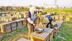 【蜜蜂养殖】什么人可以养蜜蜂?