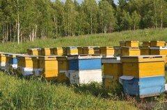 新手养蜂如何防止分蜂热?