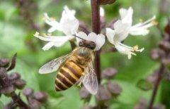 北方室内蜂群的越冬管理方法