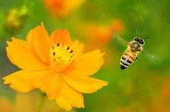 【蜜蜂养殖】哪些人不适合养蜜蜂?
