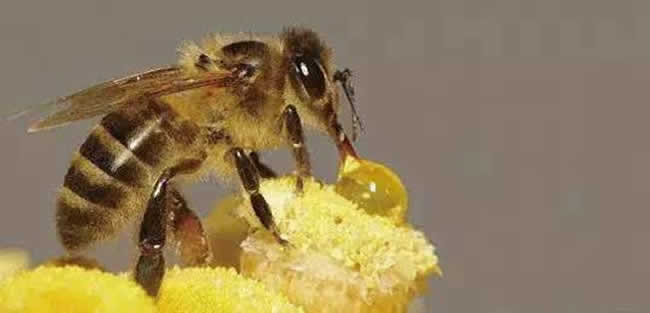 投资2万养蜜蜂利润多少?