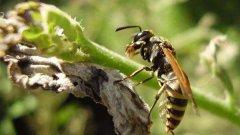春季蜜蜂群快速复壮的方法