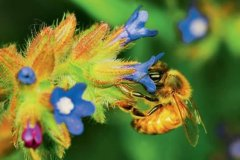 【蜜蜂知识】新手适合养什么蜜蜂?