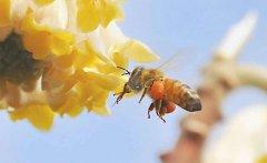 【蜜蜂养殖】养50箱蜜蜂能挣多少钱?