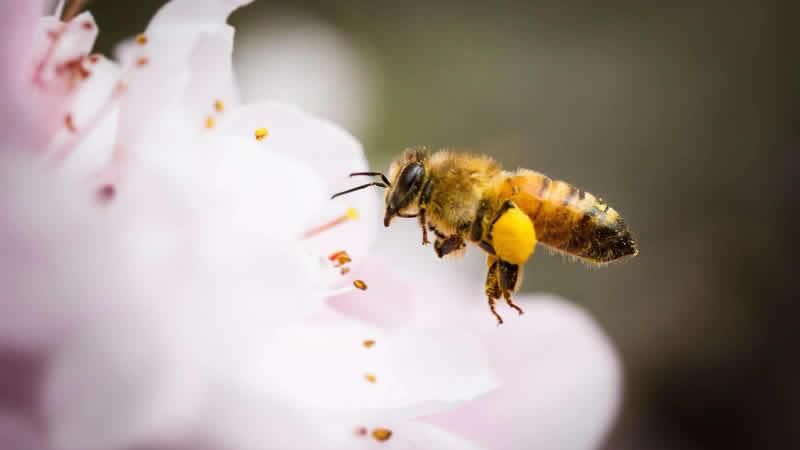 蜂巢脾是什么