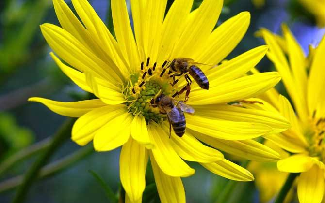 养十箱蜂一年赚多少钱?