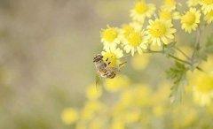【蜜蜂养殖】2018年养蜜蜂能赚钱吗?