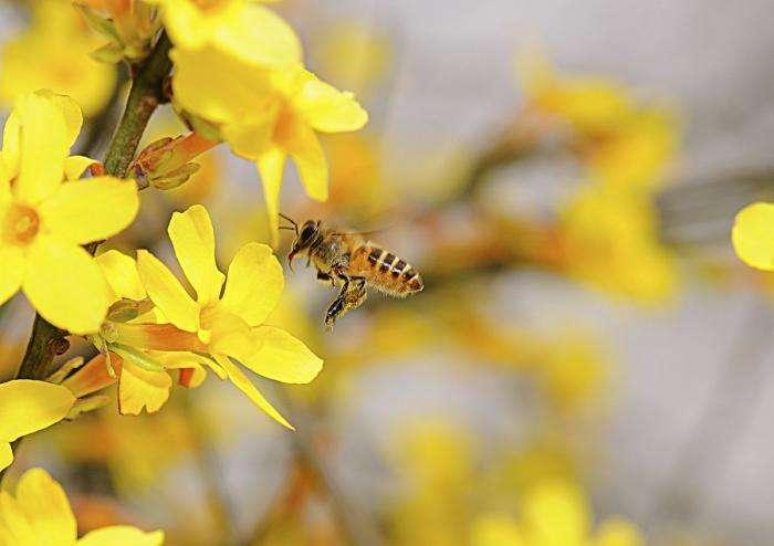 巢虫在哪个季节最多?