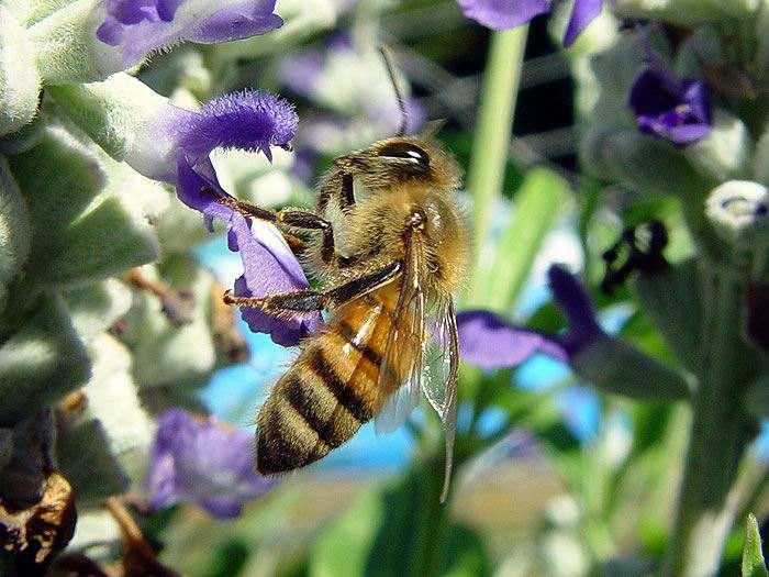蜂群发展过弱怎么办?
