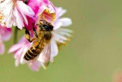 【蜜蜂知识】在自家阳台如何养好蜜蜂?