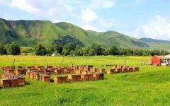 【蜜蜂养殖】养蜂初学者要注意弱群越冬的管理