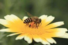 【蜜蜂知识】天气冷了蜜蜂怎样管理?