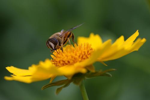 100只蜜蜂一蜂王如何繁殖