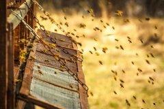 【蜜蜂知识】如何制作简单的蜂箱?