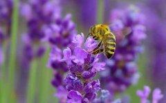 【蜜蜂知识】蜜蜂怎么分蜂?